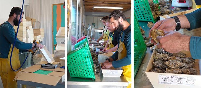 Emballage Huîtres, La Belle du Nordet